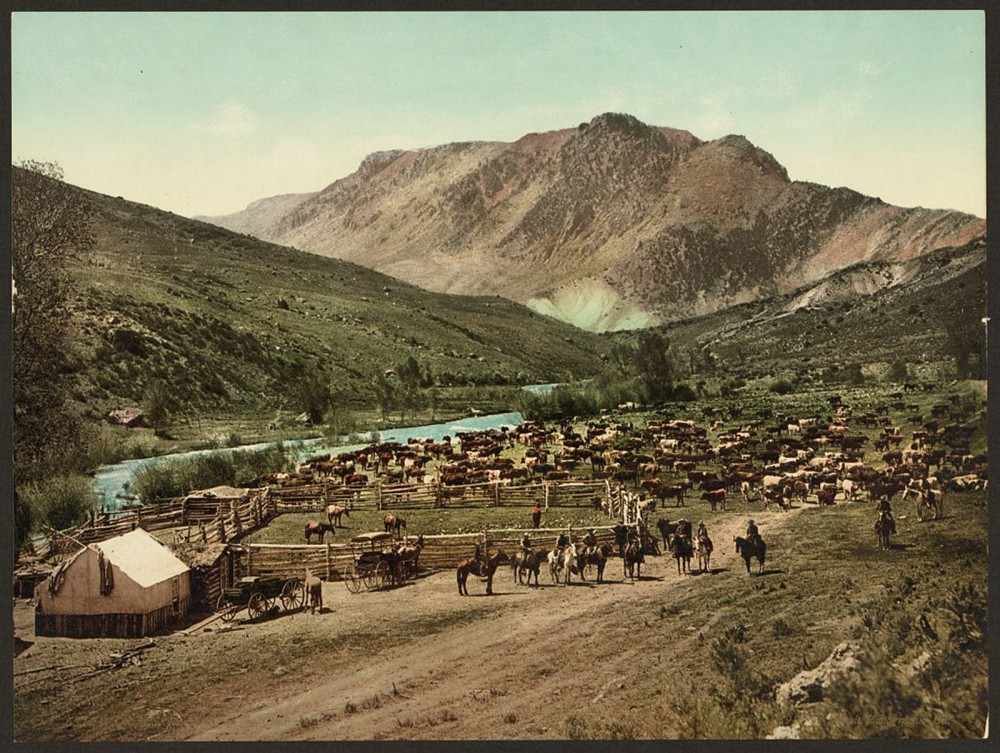 "This photochrom print (a new technology in the late nineteenth century that colorized images from a black-and-white negative) depicts a cattle round up in Cimarron, a crossroads of the late-nineteenth-century cattle drives. Detroit Photographic Co., ""Colorado. 'Round up' on the Cimarron,"" c. 1898. Library of Congress, http://www.loc.gov/pictures/item/2008678198/."